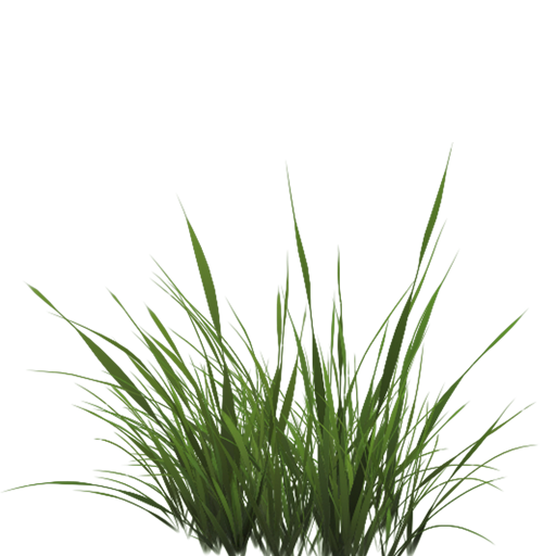 Texture image of grass with transparency